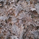 what maintenance does a deck need for winter? start with the leaves